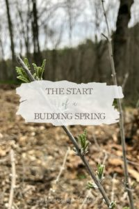 The Start Of A Budding Spring | Growing Up Herbal | Spring is here! I'm sharing some photos of plants blooming on the mountain and how living changes from season to season.