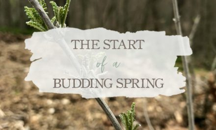 The Start Of A Budding Spring