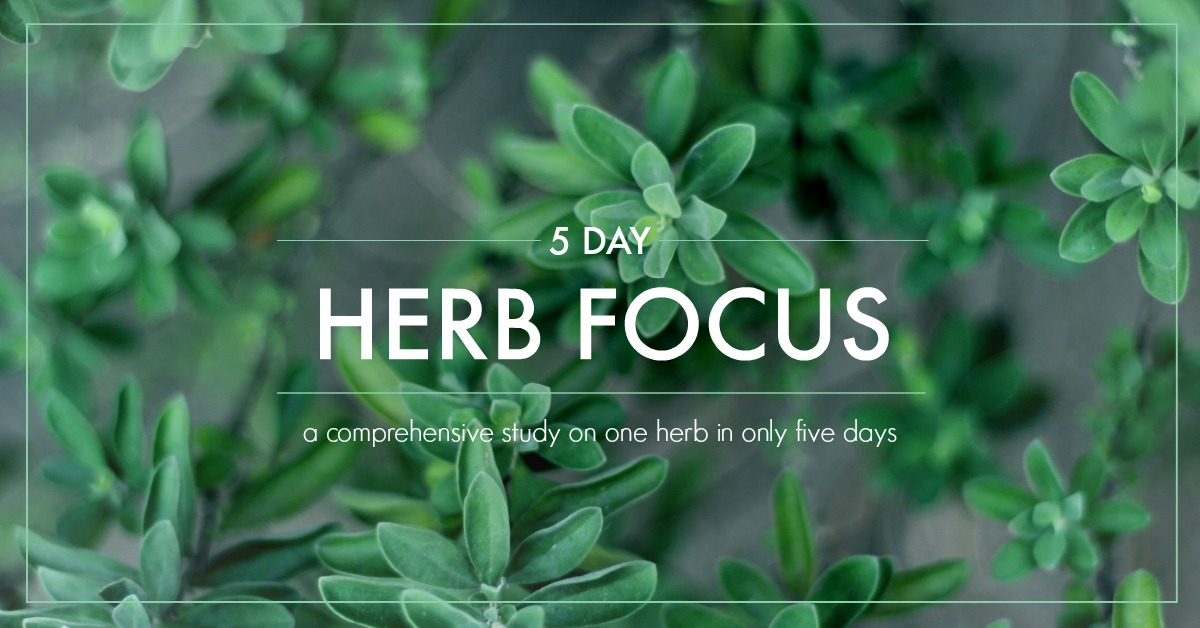 Why You Should Study One Herb At A Time (And What May Happen When You Don't!) | Growing Up Herbal | Instead of relying on everyone else's understanding of herbs, why not develop your own? Here's how!