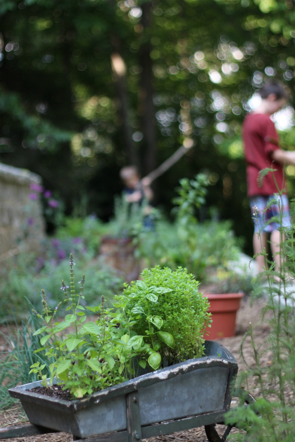 Life Lately: Summer Gardens | Growing Up Herbal | Take a tour of my brand new summer gardens and see how our landscaping project turned out this year.