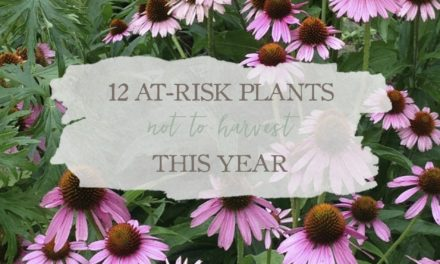 12 At-Risk Plants You Should Not Harvest This Year