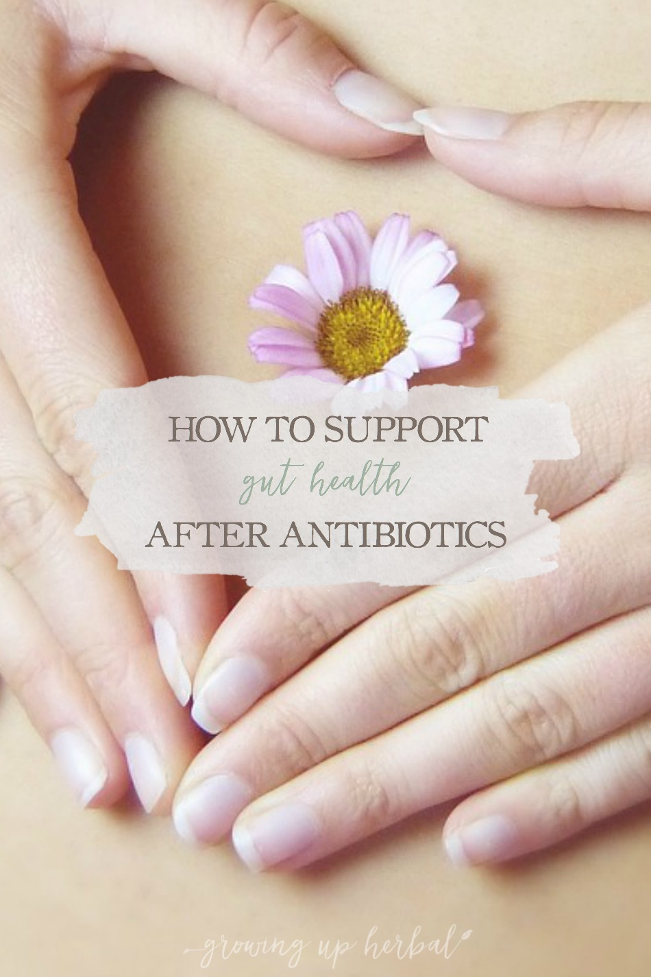 How To Support Gut Health After Antibiotics | Growing Up Herbal | If you're wondering how to support gut health after needing a round or two of antibiotics, this post will explore some of the best options.