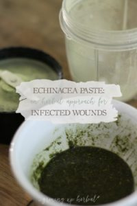 Echinacea Paste: An Herbal Approach For Infected Wounds | Growing Up Herbal | Echinacea is a well-known herbal ally for venomous animal and insect bites and stings as well as infected wounds. Learn how to use it effectively for infections in this blog post!