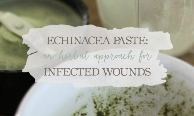 Echinacea Paste: An Herbal Approach For Infected Wounds