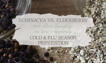 Echinacea Versus Elderberry: And Other Thoughts On How I Approach Cold & Flu Season