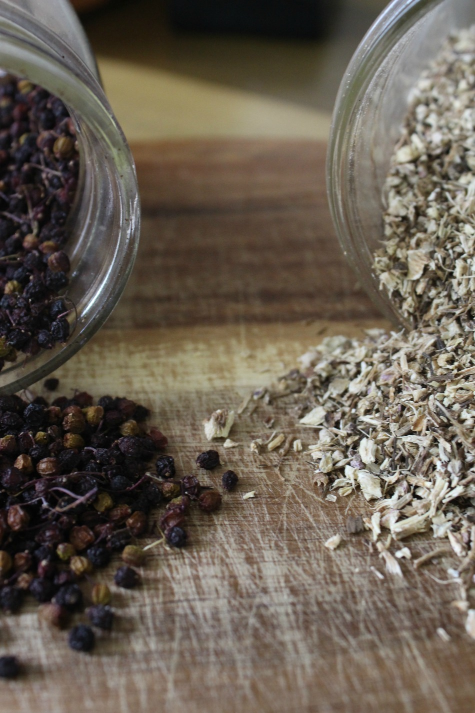 Echinacea Versus Elderberry For Cold & Flu Season | Growing Up Herbal | Learn more about echinacea versus elderberry — how they compare in action and how to use them as preventatives during cold and flu season.