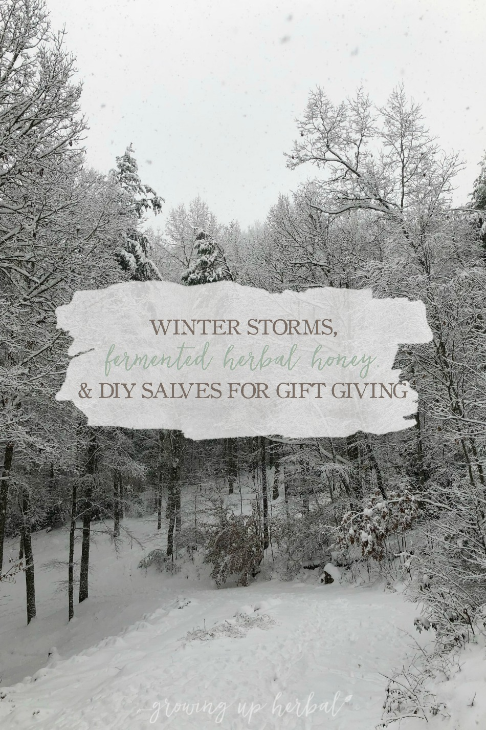 Winter Storms, Fermented Herbal Honey Recipe, and DIY Salves for Gift Giving