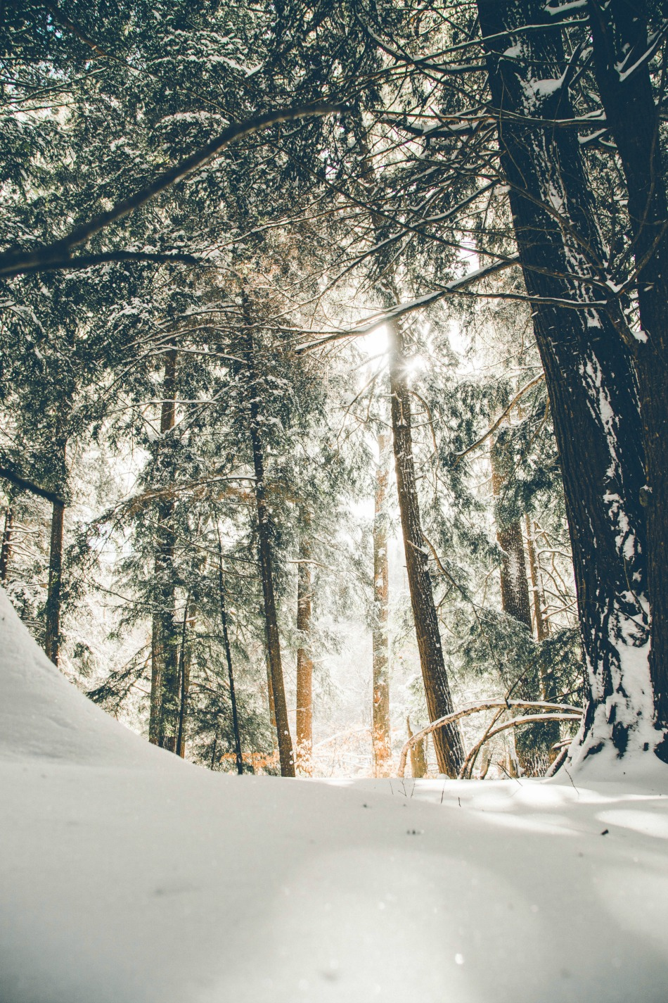 The Magic of Winter   Growing Up Herbal   Grab a cup of hot tea and stop by to read my thoughts on the magic of winter today!