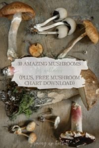 10 Amazing Mushrooms For Wellness (+ Free Mushroom Chart Download) | Growing Up Herbal | Learn about 10 mushrooms that are safe to use for wellness and get a free printable too!