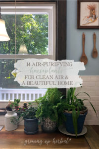 14 Air-Purifying Houseplants For Clean Air & A Beautiful Home   Growing Up Herbal   Here are 14 air-purifying houseplants that are great for indoors, easy to grow and care for (even for beginners), and make lovely additions to your home!