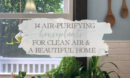 14 Air-Purifying Houseplants For Clean Air & A Beautiful Home