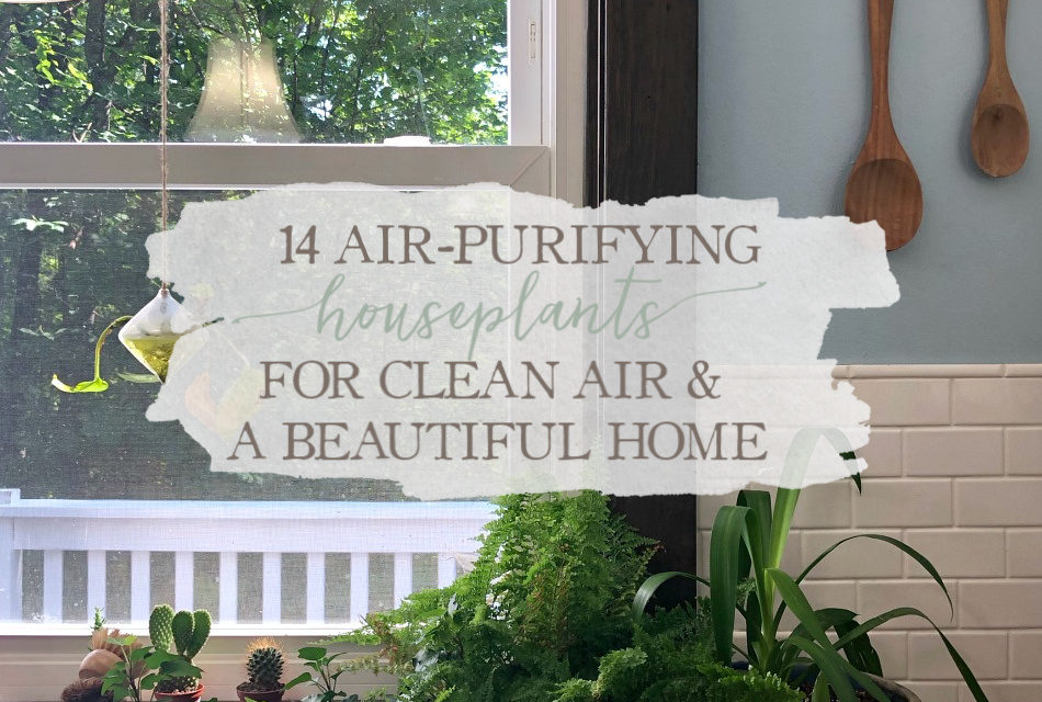 14 Air-Purifying Houseplants For Clean Air & A Beautiful Home