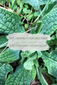 Comfrey Controversy: Can and Should One Use Comfrey Internally | Growing Up Herbal | Should you use comfrey internally? This article will explore the benefits, traditional uses, and safety of comfrey to answer this commonly debated question.