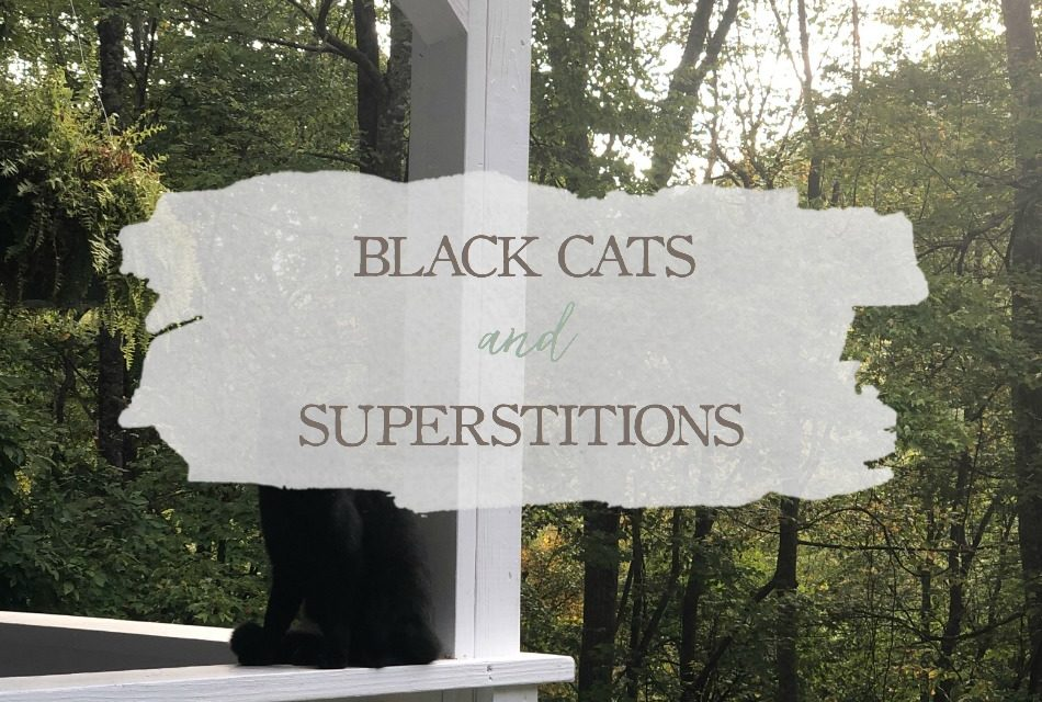 Black Cats and Superstitions