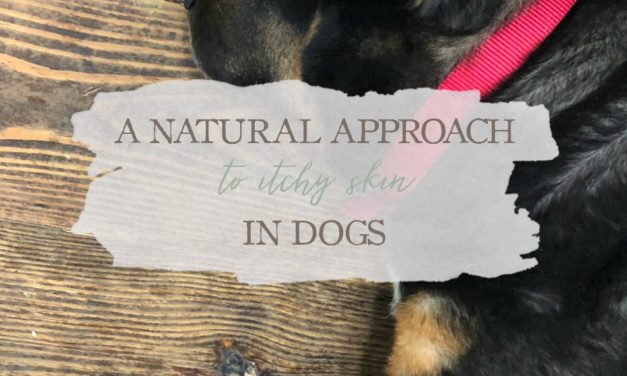 A Natural Approach to Itchy Skin in Dogs