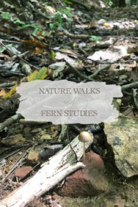 Nature Walks & Fern Studies | Growing Up Herbal | Nature walks are a part of our regular homeschool schedule, and this month, we're studying ferns and mushrooms.