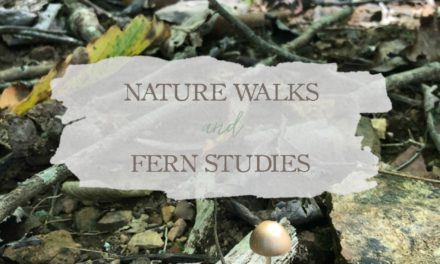Nature Walks & Fern Studies