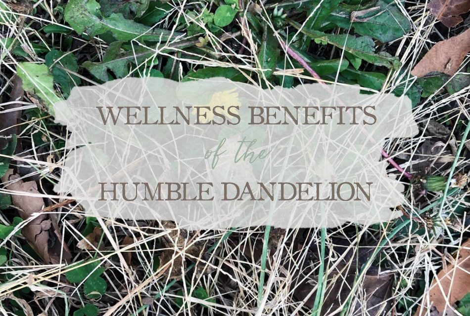 Wellness Benefits of the Humble Dandelion