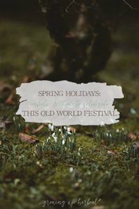 Spring Holidays: Imbolc & How To Celebrate This Old World Festival | Growing Up Herbal | Curious about seasonal living? If so, learn about the spring holiday of Imbolc, aka, Candlemas or St. Brigid's Day, and some festive ways to celebrate it.