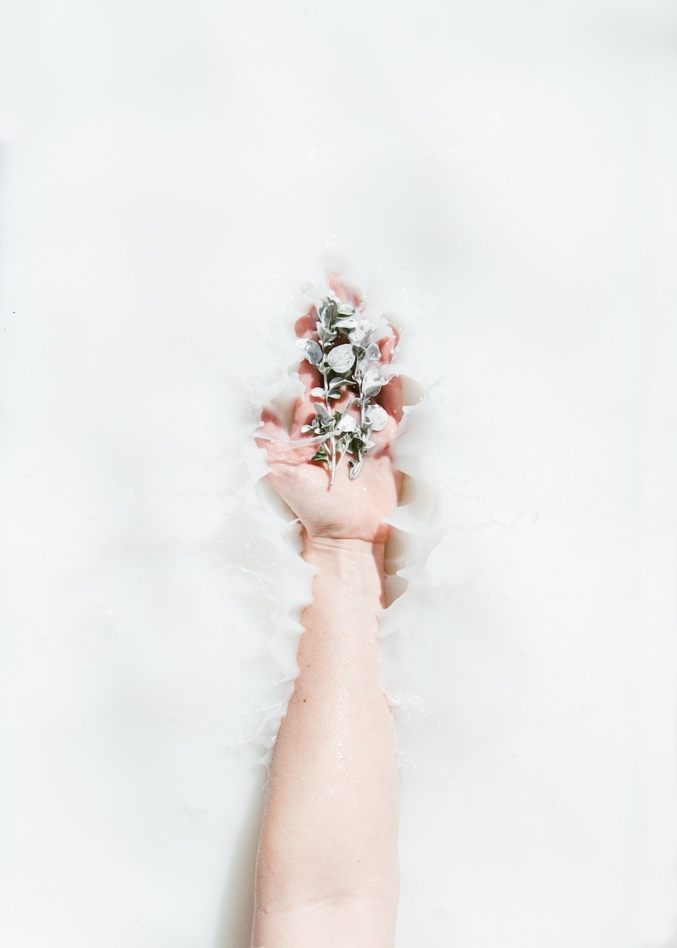 hand holding plant in milky water