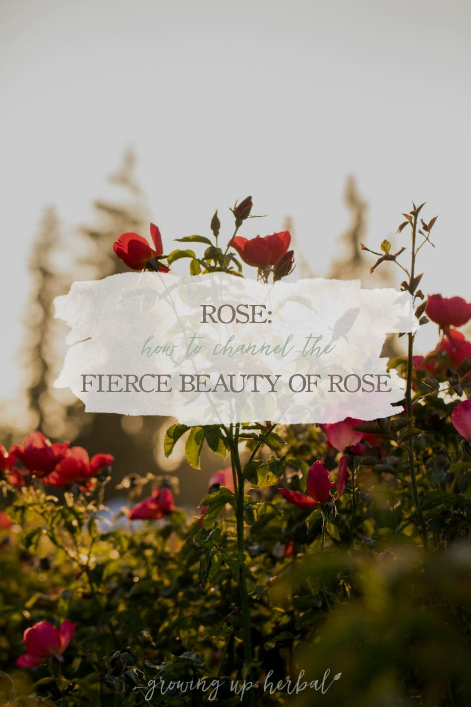 Rose: How To Channel the Fierce Beauty of Rose