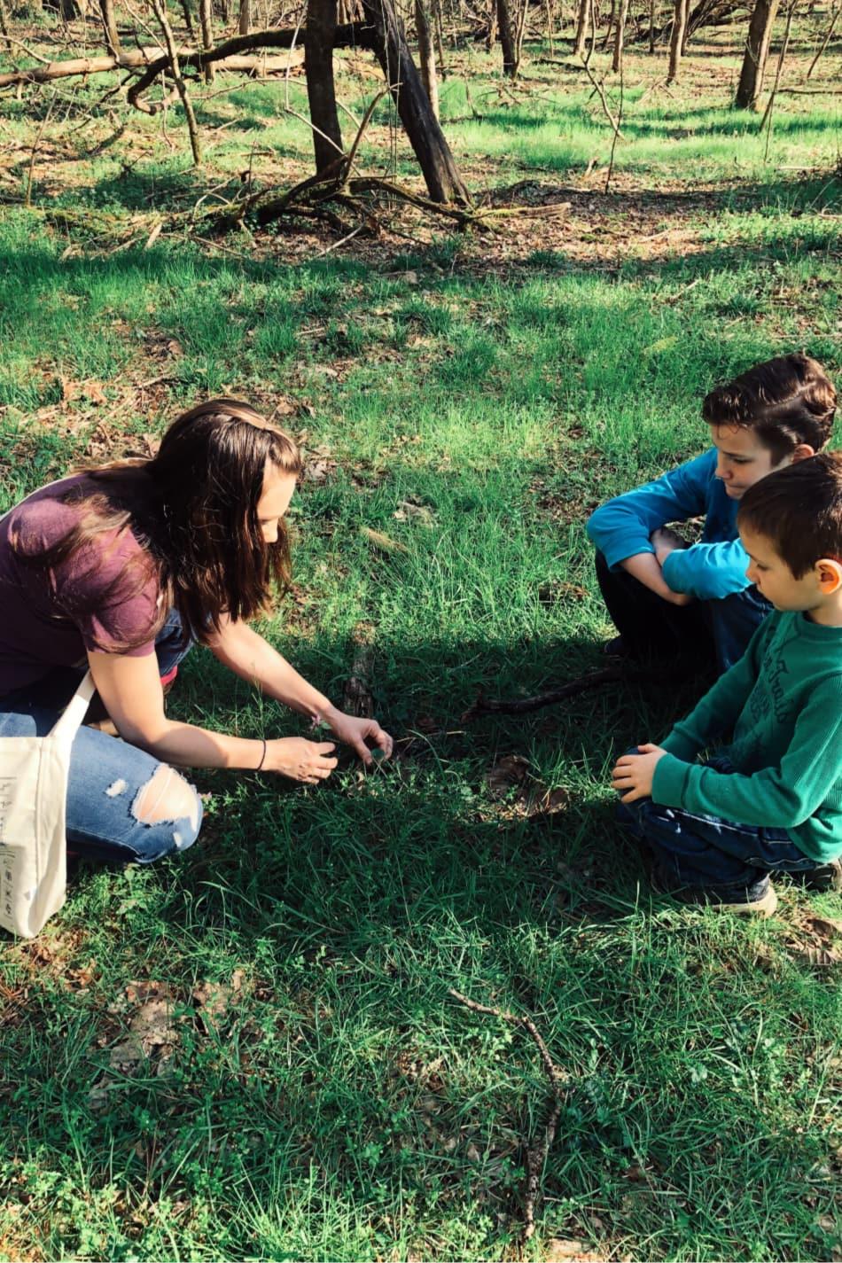 harvesting herbs with kids