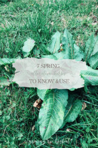 7 Spring Alterative Herbs To Know And Use | Growing Up Herbal | Learn about seven spring alternative herbs and how to use them to support the body in its cleansing and detoxification efforts.
