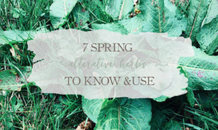 7 Spring Alterative Herbs To Know And Use
