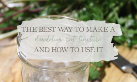 The Best Way to Make a Dandelion Root Tincture (And How To Use It)