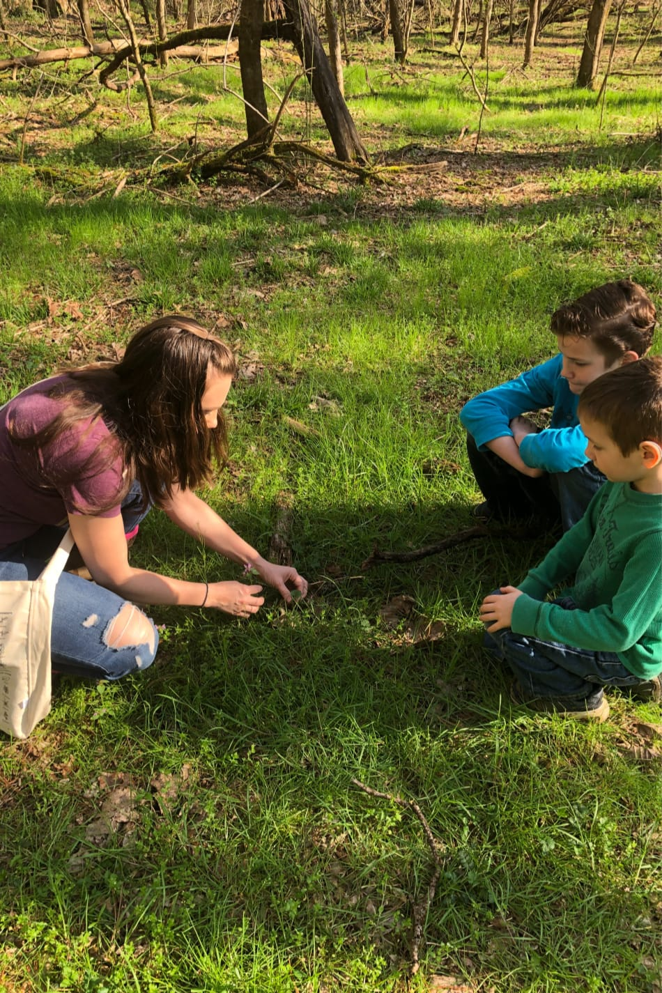 foraging spring herbs with kids