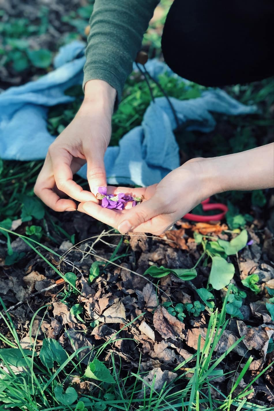 person picking violet flowers