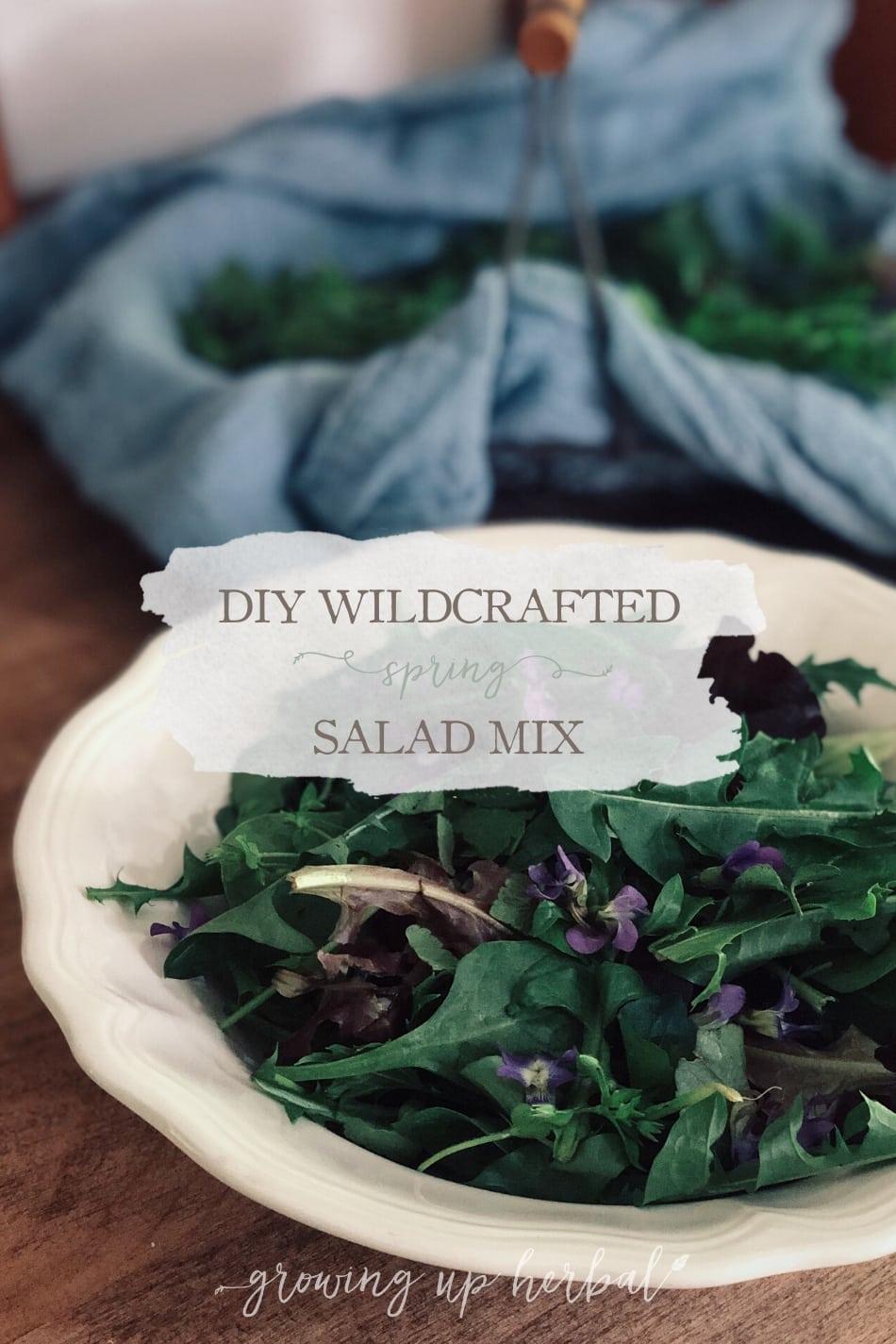 DIY Wildcrafted Spring Salad Mix