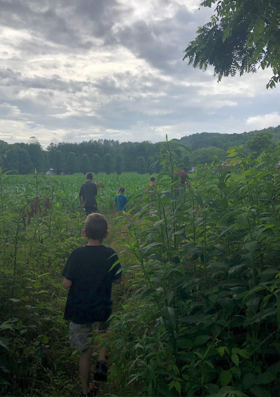 boys walking through a field
