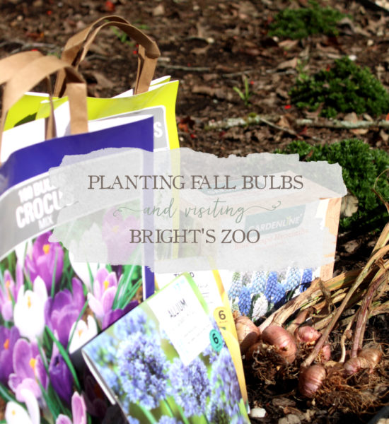 Weekly Vlog: Planting Fall Bulbs & Visiting Bright's Zoo