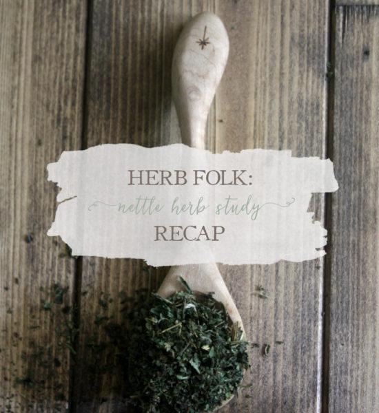Herb Folk: Nettle Herb Study Recap